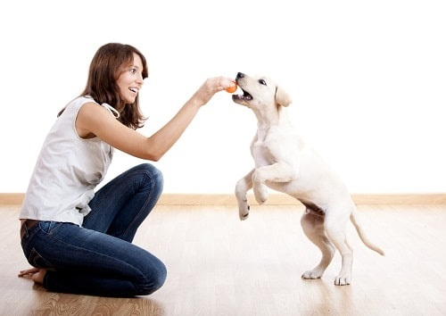 Young woman playing with puppy