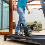 Person walking a small dog on a treadmill
