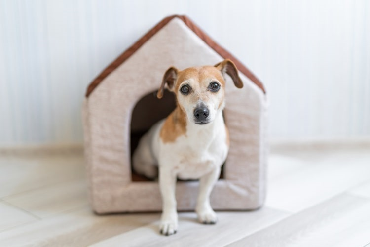 Small dog stepping out of a cozy indoor dog house