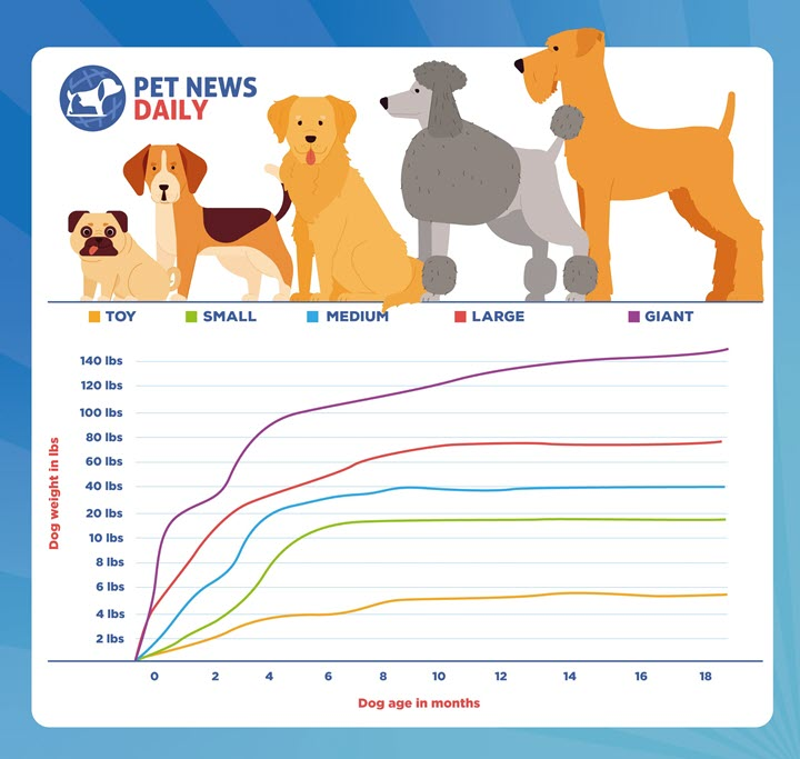 puppy growth chart for toy, small, medium, large and giant dogs